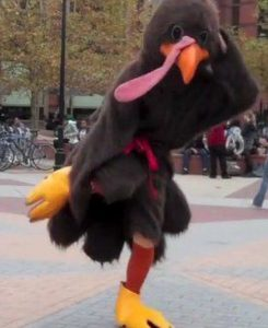 Dancing Turkey
